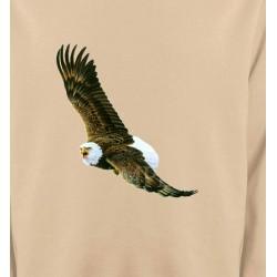 Aigle en vol aigle pygargue à tête blanche