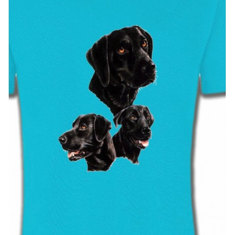 Labrador noir (B)