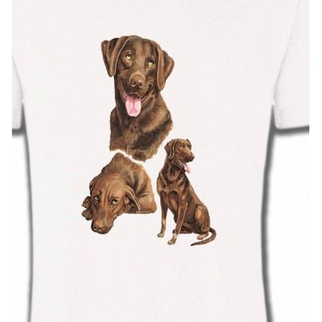Labrador chocolat  (F)