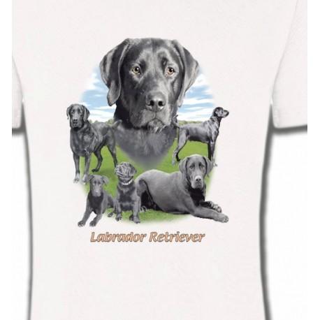 Labrador paysage gris paysage (O)