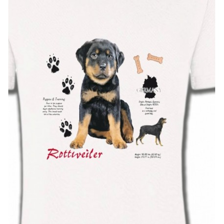Rottweiler Chiot  (Q)